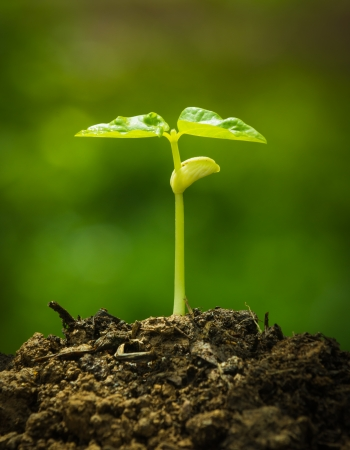 Green sprout growing from seed Stock Photo