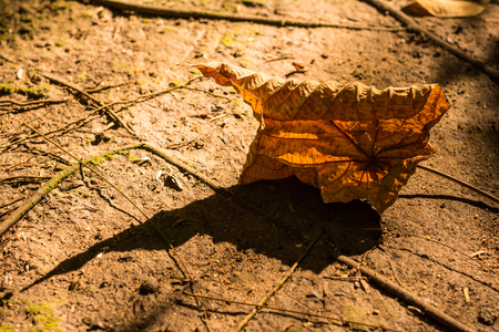 colorful autumn leaves on forest floor photo