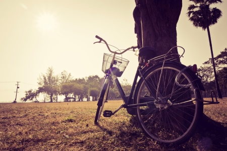 Vintage bicycle waiting near tree photo