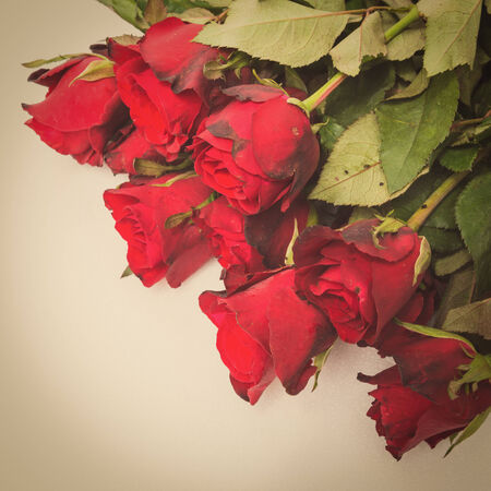 red rose with retro filter effect photo