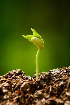 seedling and growing