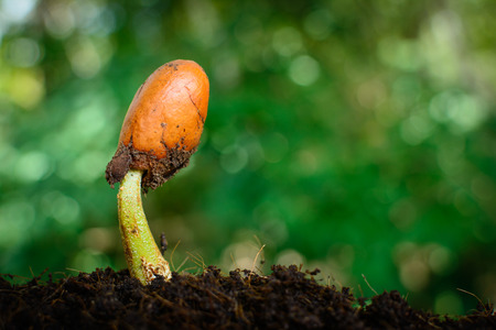 offshoot: seedling and sprout Stock Photo