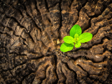 success business concept as a seedling growing in the center trunk as a concept of support building a future.