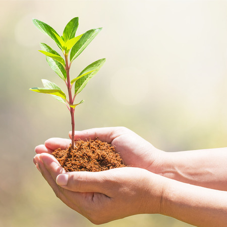 hand holding and planting new tree