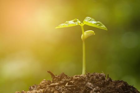 Groene spruit groeien uit zaad en kleurtoon effect