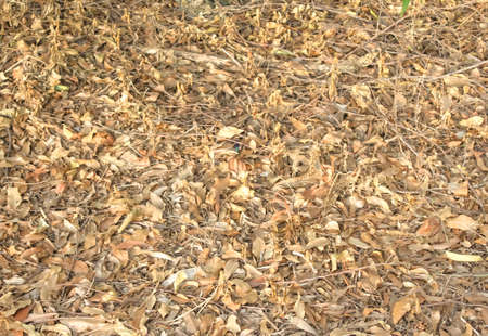 The floor is covered with dewy leaves and branches that are deposited on the floor.