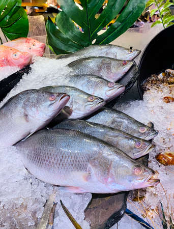 Side-view photography of the fresh Giant Seaperch fish on ice. Street seafood in Asia spiny Asian seabass, barramundi, giant seaperch, silver seaperch fish at the seafood market in Bangkok, Thailand.
