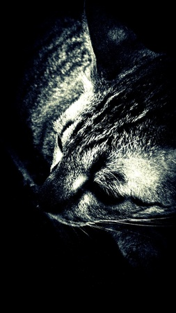nose: Cat sleep in the dark Stock Photo