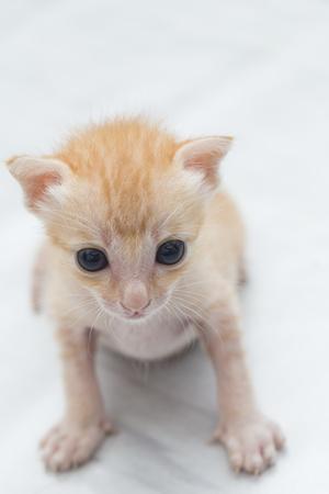 orphaned: Feeding orphaned kitten with milk replacer Stock Photo