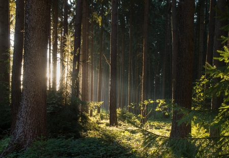 forrest: Light in the Forest
