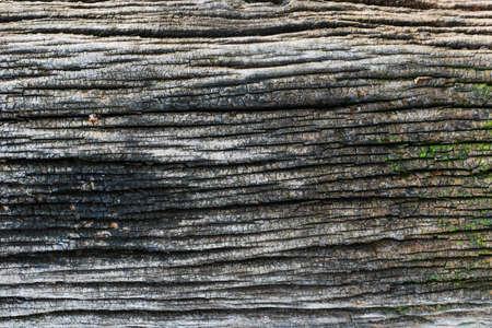 black wood texture: Black wood texture