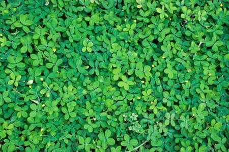 blade of grass: Green grass texture Stock Photo
