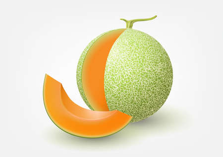 Cantaloupe melon, fruit vector illustration