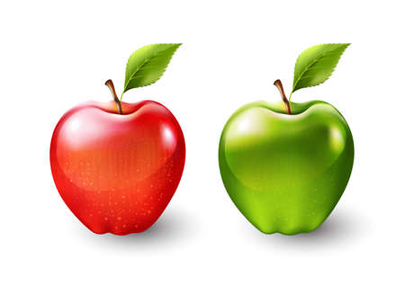 Red apple and green apple, fruit isolated, Vector illustration  イラスト・ベクター素材