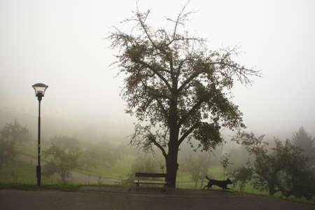 Autumn fog in park   photo