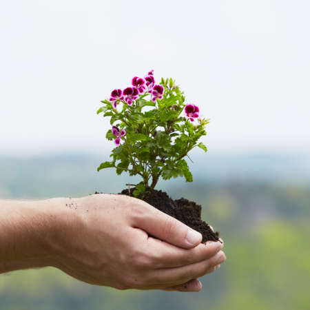 flower close up: Man is holding a green young plant - spring