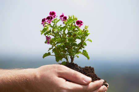 Man is holding a green young plant - spring photo