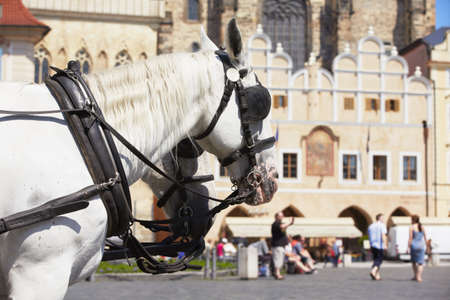horse drawn carriage: Horse drawn carriage in Old Town square in Prague