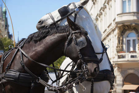Horse drawn carriage in Old Town square in Prague