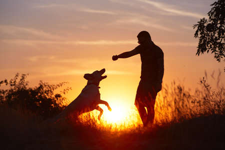 dogs play: Young man with his yellow labrador retriever in nature - back lit