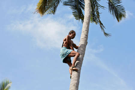 nimble: Man is climbing up to palm tree for harvest cocconut