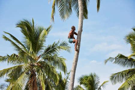 Man is climbing up to palm tree for harvest coconut  Zdjęcie Seryjne
