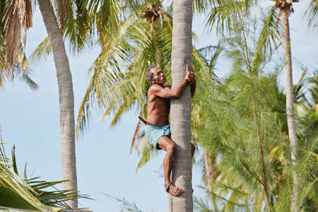 Man is climbing up to palm tree for harvest coconut  Stock Photo