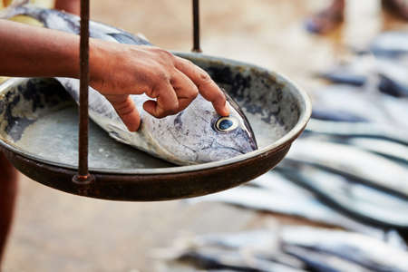 fish market: Catch on the traditional fish market in Sri Lanka - selective focus Stock Photo