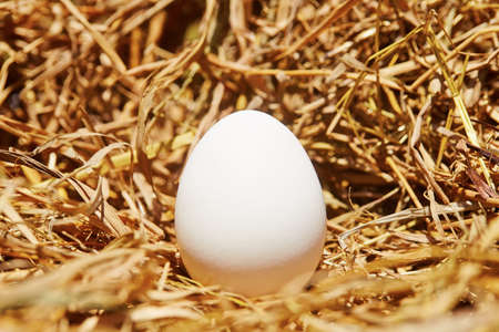 One chicken egg in straw - selective focus photo