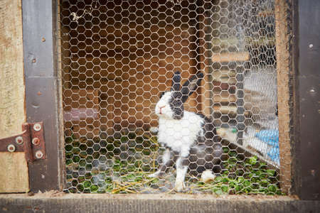 rabbit cage: Rabbit in the rabbit hutch - selective focus Stock Photo