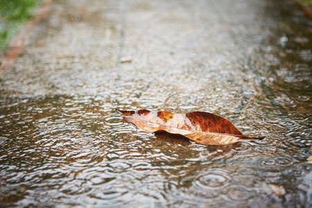 大雨の歩道に落ち葉