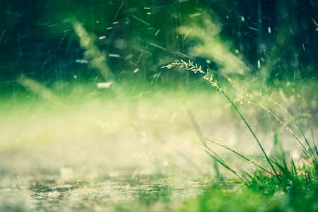 rain water: Heavy rain in park - selective focus on grass Stock Photo