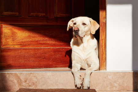 house pet: Dog is waiting in door of house.