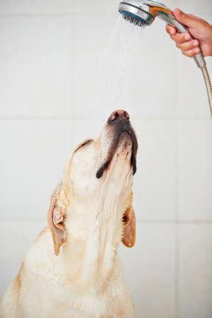 принимает душ фото