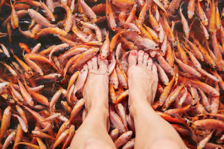 Feet massage by fishes in the river. photo