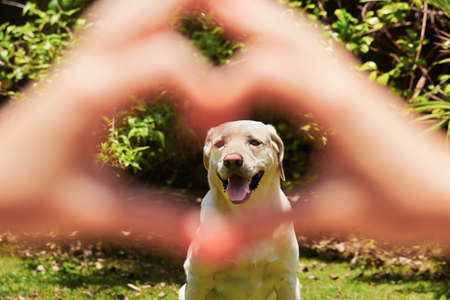 dog summer: Young woman is making heart shape with her dog. Stock Photo