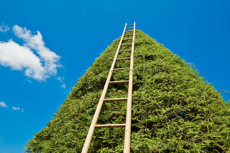 rise to the top: Ladder to heaven - summer day in the garden work  Stock Photo