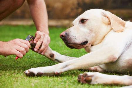 男は犬の足の爪をカットします。