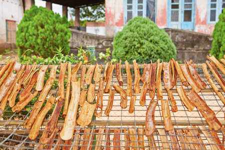 flavoring: Sticks of cinnamon is drying in small workshop in  Sri Lanka.