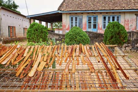 cinnamon bark: Sticks of cinnamon is drying in small workshop in  Sri Lanka.