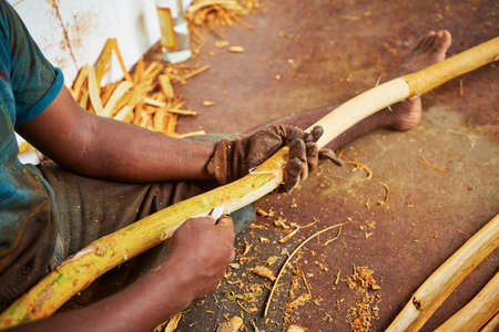 agriculture sri lanka: Man is processing branches of cinnamon in small workshop in  Sri Lanka.