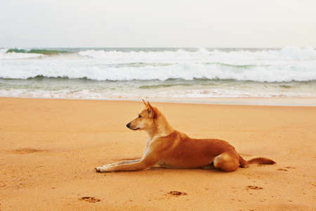 Stray dog is waiting on the beach photo