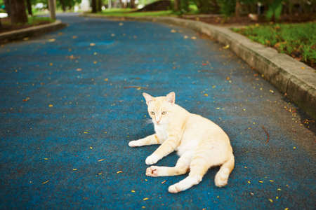 Stray cat on the road in city park photo