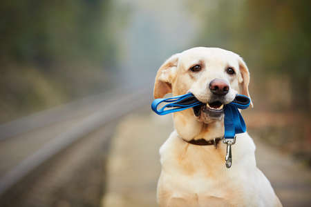 Dog is waiting for the owner on the railway platform photo