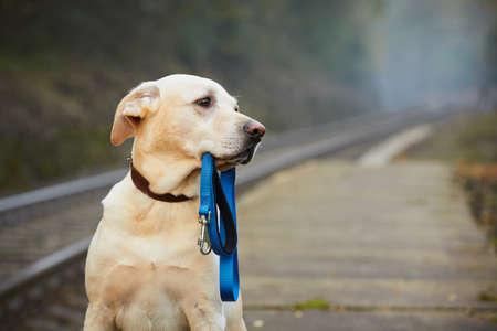 Hund wartet auf den Besitzer auf dem Bahnsteig Standard-Bild - 32461781