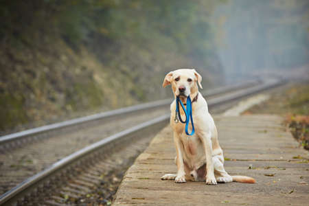 pet leash: Dog is waiting for the owner on the railway platform