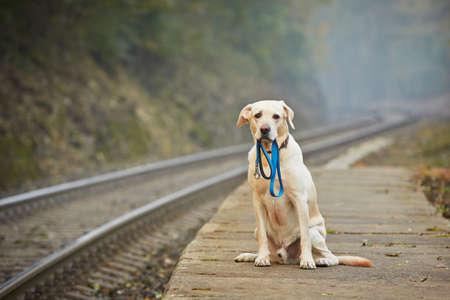 Hund wartet auf den Besitzer auf dem Bahnsteig