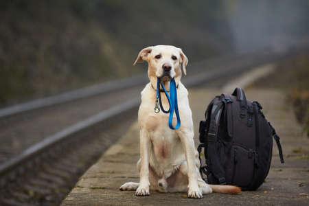 Kutya várja a tulajdonos a vasúti peron Stock fotó