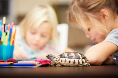 baby turtle: Girls and turtle. Siblings are doing his homework for elementary school.