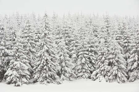 Fresh snow in wintry landscape, Czech Republic photo